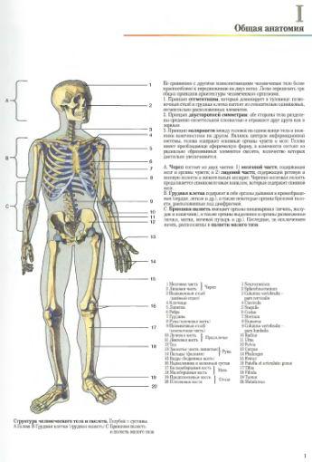 Общая анатомия человека