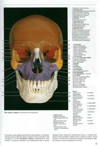 Голова. Череп. Кости черепа