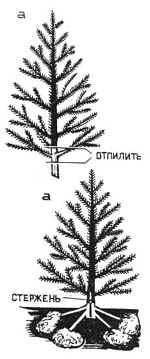 Установка елки1(19294 bytes)