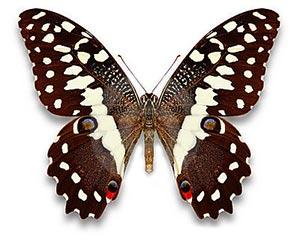 Ознакомление дошкольников с окружающим миром: бабочки